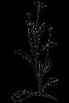 daisy-32805